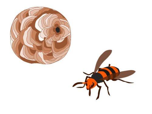 スズメバチと巣のイラスト